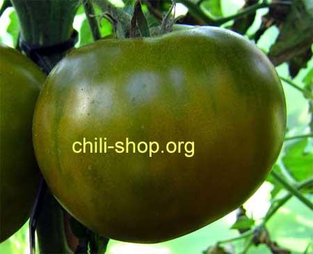 tomate gruen hamph blaue tomate kaufen chili seeds chili. Black Bedroom Furniture Sets. Home Design Ideas