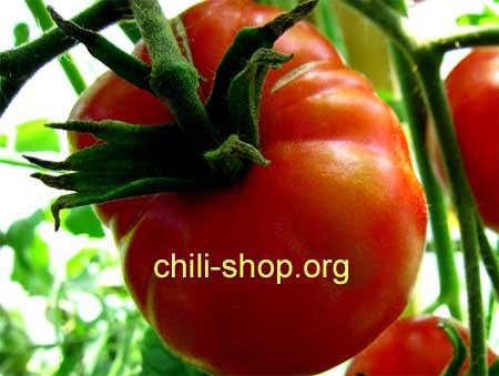 tomate rot marglobe blaue tomaten samen kaufen chili seeds im shop seltene tomatensorten kaufen. Black Bedroom Furniture Sets. Home Design Ideas