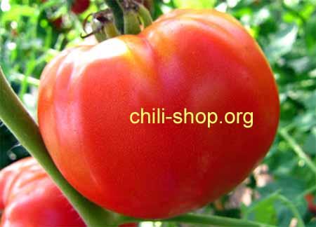 tomate rot marmande blaue tomaten samen kaufen chili seeds alte tomatensorte. Black Bedroom Furniture Sets. Home Design Ideas