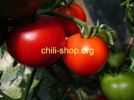 tomate rot noires mavr blaue tomaten samen kaufen chili seeds im shop chili. Black Bedroom Furniture Sets. Home Design Ideas